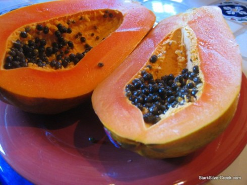 Blue-Lizards-Papaya-Loreto-BCS-1-550x412